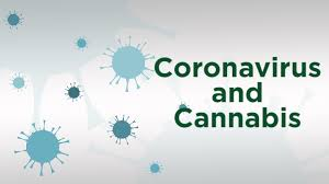 Coronavirus Spread Prompts Cannabis Research Event Cancellations, Widening a Gap in the Industry - Cannabis Business Times
