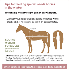 tips for feeding special needs horses