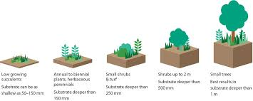 green roof plants growing green guide