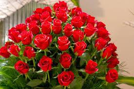 اجمل الصور الورد في العالم