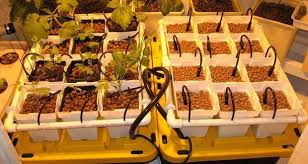 diy hydroponics systems to grow soil