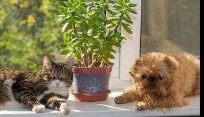the 10 most toxic houseplants the