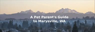 A Pet Parent S Guide To Marysville Wa Totally Tails Pet Care Services