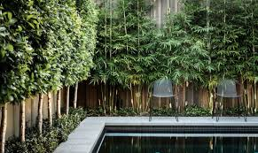 privacy plants for screening your yard