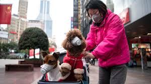 Coronavirus nei cani e gatti: rischio contagio e sintomi