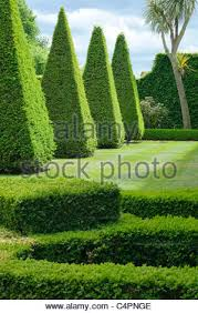 english boxwood garden design norfolk