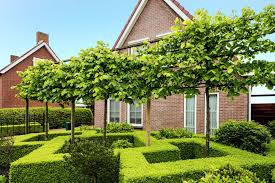 12 Different Types Of Boxwood Shrubs