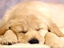 puppies wallpapers free group