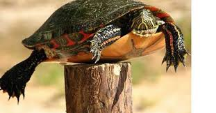 The Post Turtle