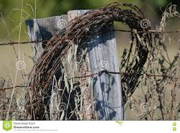 Old Barbwire On Fence Stock Photo Image Of Fence Roll 79807880