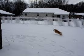 Dog Fence Archives Wambam Fence