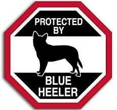 Amazon Com Jr Studio 4x4 Inch Octangular Protected By Blue Heeler Sticker Funny Dog Breed Love Vinyl Decal Sticker Car Waterproof Car Decal Bumper Sticker Kitchen Dining