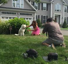 Shelton Dog Wins Contest To Be Featured On Canine Company Billboard Shelton Ct Patch