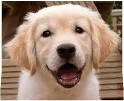 """Résultat de recherche d'images pour """"gif chien"""""""