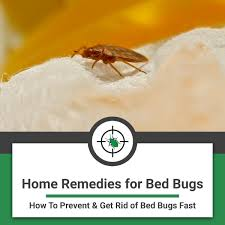home remes for bed bugs how to get