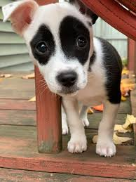 just dropping in to say hello! : Eyebleach