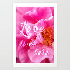 love lives here beautiful flower camellia flower r tic