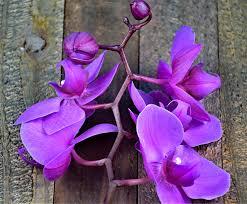 صور ورد الأوركيد أجمل صور أزهار الأوركيد الطبيعية والرومانسية