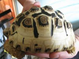 Rescuers Build Perfect Habitats For Turtles And Tortoises Thefencepost Com