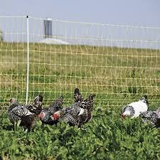 10 Best Electric Fence For Chickens In 2020 Homesthetics Inspiring Ideas For Your Home