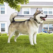 Customer Reviews Motorola Wireless Pet Fence System White Wirelessfence25 Best Buy