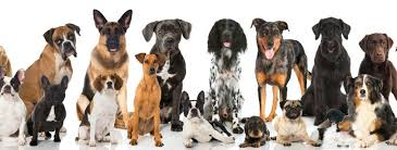 Electric Dog Fences Wireless Dog Fences Cruel Or Kind Find Out More