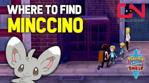 Where to find Missing Minccino - Pokemon Sword and Shield - YouTube