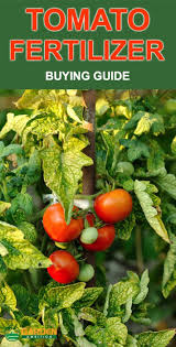 fertilizer for tomatoes plants