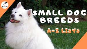 all small dog breeds a z with