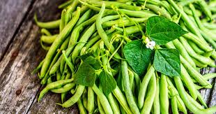 how to grow green beans for a win in