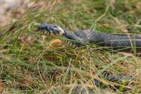 4 Ways To Keep Snakes Out Of Your Yard Snake Control