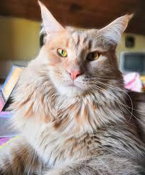 Festa del gatto 2019: le foto dei vostri mici del cuore - Galleria ...