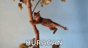 Hurricane Huracan GIF - Hurricane Huracan Cat - Discover & Share GIFs