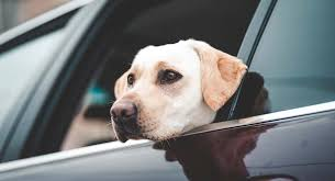 dog seat belt and car harness reviews