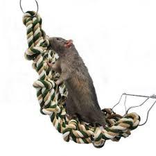 jouet pour rat lequel choisir