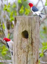Why every garden needs (and probably has) a woodpecker - Article Photos