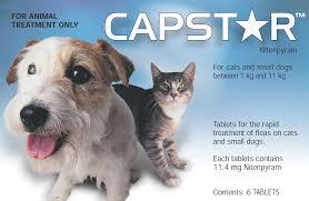 capstar flea treatment for small dogs