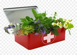 A Base De Hierbas Kit De Primeros Auxilios, Hierba, Herboristería ...