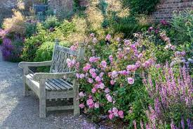 Best English Roses For Hedges