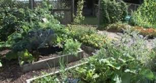 Over The Garden Fence Plan Your Victory Vegetable Garden Now Sierra News Online