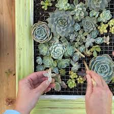 make a living succulent picture frame