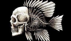 artwork charles darwin bones seaman