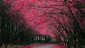 beautiful nature free stock photos hd