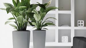 splendid indoor plant displays and eco