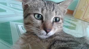 Xem Mèo bắt Chuột | Cat catches the mouse - YouTube