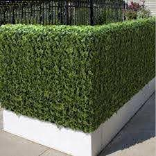 Plastic Artificial Green Leaf Fence Made Of Artificial Ivy Fence As Garden Fence Decoration View Artificial Leaf Fence Songtao Songtao Product Details From Guangzhou Songtao Artificial Tree Co Ltd On Alibaba Com
