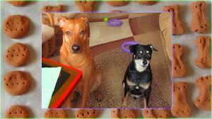 three ings homemade dog treats