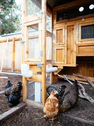 Security For Chicken Coops Tips For Predator Proofing And Protecting Your Backyard Flock Garden Betty