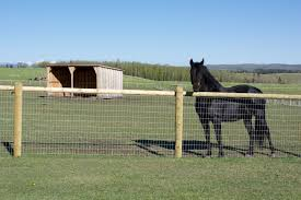 Two Horse Fence Questions Which Every Horse Must Ask Themselves Posts By Rajiv Partap Singh Horse Fencing Backyard Fences Horses