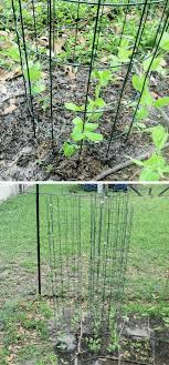 15 Brilliant Diy Pea Trellis Ideas Designs For Your Garden